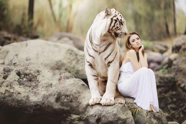 img: tiger