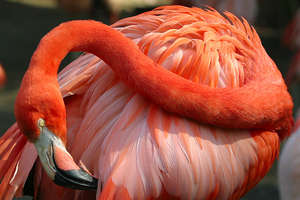 Flamingo read head 120
