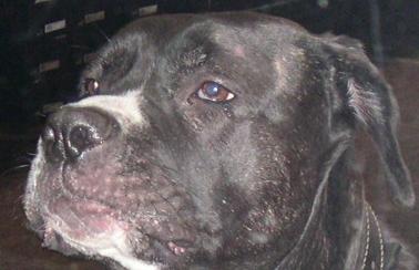 image: dog -pollimatt